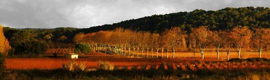 панорамные виноградники Стоковое Изображение