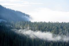 панорамный взгляд гор в туманном лесе Стоковое фото RF