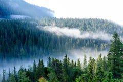 панорамный взгляд гор в туманном лесе Стоковые Изображения RF