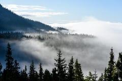 панорамный взгляд гор в туманном лесе Стоковое Изображение