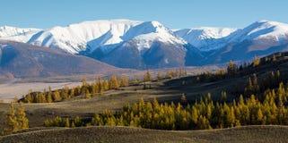 Панорамный взгляд гор гребня Altai-Chuya, западного Сибиря Стоковая Фотография RF