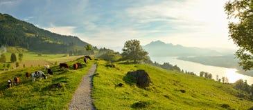 Панорамный взгляд на красивом озере Люцерне в Швейцарии стоковое изображение rf