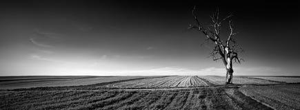 Панорамный взгляд одного дерева на поле Стоковая Фотография