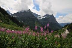 Панорамный взгляд полевых цветков стоковое изображение rf
