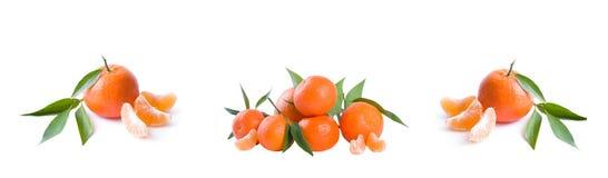 Панорамный взгляд свежие мандарины изолированные на белой предпосылке Апельсины аранжированы в строках Установлено на белой предп стоковая фотография rf