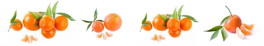 Панорамный взгляд свежие мандарины изолированные на белой предпосылке Апельсины аранжированы в строках Установлено на белой предп стоковое фото