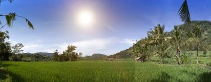 Панорамный взгляд террас и гор риса bali Индонесия стоковое изображение rf
