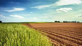Панорамный взгляд аграрных полей, съемка слайдера сток-видео