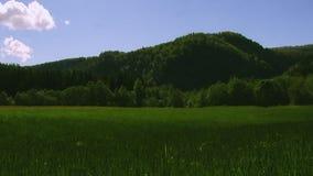 Панорамный взгляд гор покрыл древесные зелени в дне лета солнечном голубое небо field зеленый цвет Природа видеоматериал