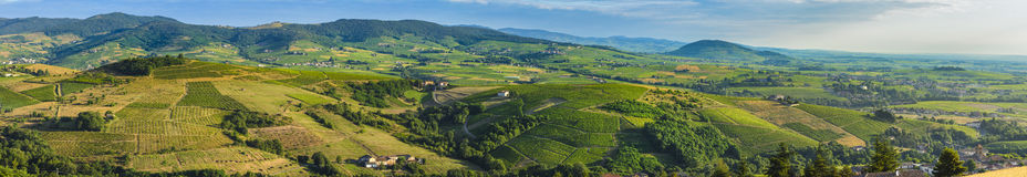 Панорамный взгляд земли божоле с утром освещает, Франция Стоковое фото RF