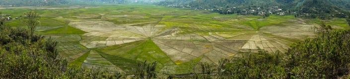 Панорамный взгляд на полях риса звезды форменных Стоковые Изображения