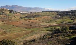 Панорамный взгляд на Ronda упрощает поля Стоковые Изображения