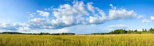 Панорамный взгляд облаков и луга Стоковые Изображения RF