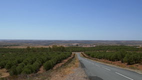панорамный взгляд долины видеоматериал
