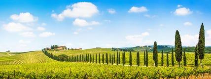 Панорамный взгляд сценарного ландшафта Тосканы с виноградником в зоне Chianti, Тосканой, Италией стоковые фото