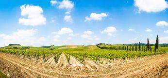 Панорамный взгляд сценарного ландшафта Тосканы с виноградником в зоне Chianti, Тосканой, Италией стоковые фотографии rf