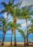 Панорамный взгляд тропического пляжа с пальмами кокоса Стоковая Фотография