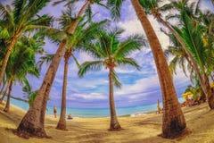 Панорамный взгляд тропического пляжа с пальмами кокоса Стоковое Изображение