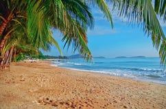 Панорамный взгляд тропического пляжа с пальмами кокоса Стоковые Фото