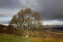 Панорамный вид к Loch Lomond и северо-западу Шотландии стоковое изображение