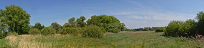 Панорамный вид на ландшафте болота с тростником и деревьями во фламандской сельской местности стоковое изображение