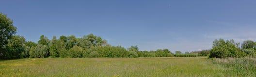 Панорамный вид на ландшафте болота с тростником и деревьями во фламандской сельской местности стоковое изображение rf