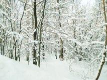Панорамный вид предпосылки леса зимы стоковая фотография rf