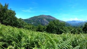 Панорамный ландшафт горы летом с передним планом папоротников Пиренеи, Франция акции видеоматериалы