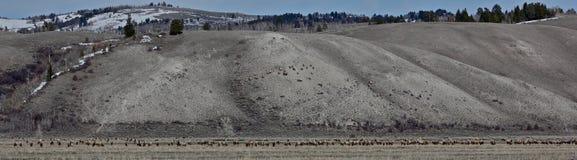 Панорамный табун Стоковое Изображение RF