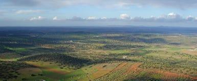 Панорамный дубов holm с облачным небом Стоковое Изображение