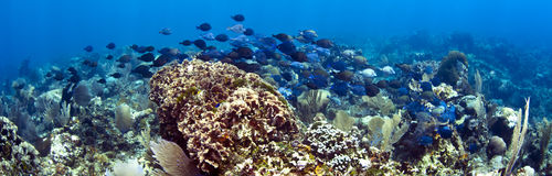 панорамный underwater Стоковое фото RF