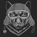 Пантера, пума, кугуар, одичалый кот Винтажное hemlet мотоцикла Ретро иллюстрация стиля с животным велосипедистом для детей бесплатная иллюстрация