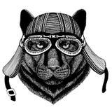 Пантера, пума, кугуар, шлем мотоцикла дикого животного велосипедиста кота дикого нося Изображение руки вычерченное для татуировки иллюстрация штока
