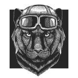 Пантера, пума, кугуар, шляпа авиатора одичалого кота нося Напечатайте для одежд детей, тройника, футболки Пилотное дикое животное иллюстрация штока