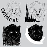 пантера стильного логотипа вектора черная Стоковое Фото