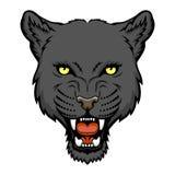 Пантера Стоковая Фотография RF