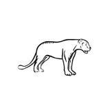 пантера иллюстрация вектора
