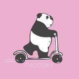 Панда второпях едет самокат Розовая предпосылка Стоковое Изображение RF