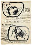 Панда и слон - вектор, плакат иллюстрация вектора