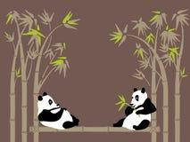 панды Стоковые Изображения