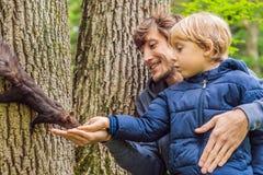 Папа и сын кормят белку в парке стоковое фото rf