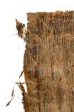 Папирус Стоковая Фотография RF