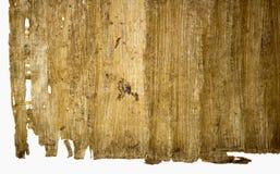 Папирус Стоковые Изображения RF