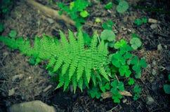 Папоротники и зеленый цвет мха Растет на скалистой земле Стоковые Изображения
