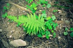Папоротники и зеленый цвет мха Растет на скалистой земле Стоковое Изображение