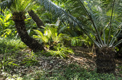 Папоротники на поле леса Стоковые Фото