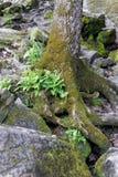 Папоротники растя из мха покрыли ствол дерева Стоковые Фото
