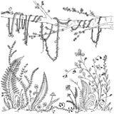 Папоротники, цветки, лозы и ягоды в лесе, богатая растительность Printable страница для взрослых, деятельность при расцветки анти иллюстрация штока