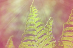 Папоротник весны яркий ый-зелен Стоковые Изображения RF