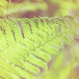 Папоротник весны яркий ый-зелен Стоковое Фото